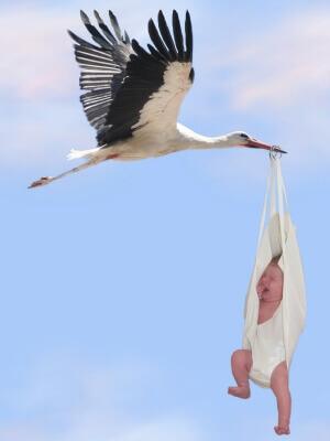 Familienplanung | Storch mit Baby (c) Steffi Pelz / pixelio.de