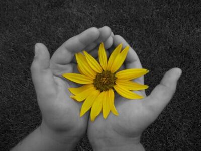 Sonnenblume in der Hand als Symbol für Sterbevorsorge (c) h.b. / pixelio.de